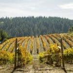 Visiting California's Amazing Vineyards
